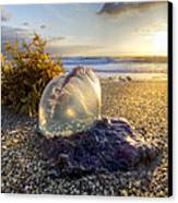 Pearl Of The Sea Canvas Print by Debra and Dave Vanderlaan