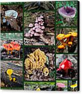 Pennsylvania Mushrooms Collage 2 Canvas Print by Mother Nature