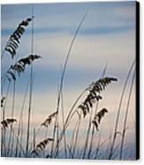 Pensacola Beach Sea Oats Canvas Print by Steven Gray
