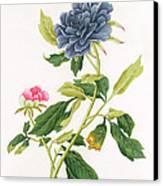 Peony Canvas Print by Georg Dionysius Ehret
