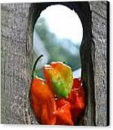 Peppered Fence Canvas Print by Lauri Novak