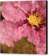 Petaline - Ar01bt04c2 Canvas Print by Variance Collections