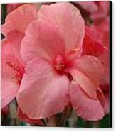 Pink Canna Canvas Print by Paul Slebodnick