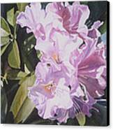 Pink Rhododendron Canvas Print by Sharon Freeman