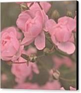 Pink Roses Canvas Print by Paula Sharlea