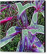 Plasticized Cape Lily Digital Art Canvas Print by Merton Allen