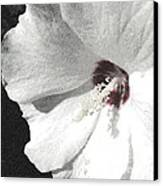 Pointillized Althea Flower Canvas Print by Renee Trenholm