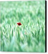 Poppy In Wheat Field Canvas Print by By Julie Mcinnes