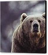 Portrait Of A Kodiak Brown Bear Canvas Print by Joel Sartore