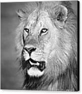 Portrait Of A Lion Canvas Print by Richard Garvey-Williams