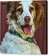 Portrait Of Springer Spaniel Dog Canvas Print by Melinda Moore