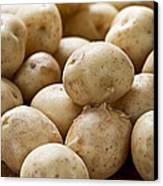 Potatoes Canvas Print by Elena Elisseeva