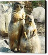 Prairie Dog Formal Portrait Canvas Print by Susan Savad