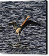 Prancing Heron Canvas Print by David Lee Thompson