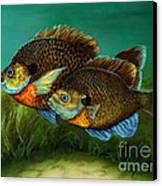Pretty Little Panfish Canvas Print by Kathleen Kelly Thompson