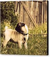 Pug Pose Canvas Print by Taryn