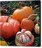 Pumpkin Patch Canvas Print by Kathy Yates