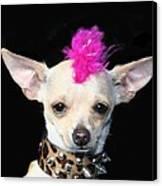 Punk Rock Chihuahua Canvas Print by Ritmo Boxer Designs