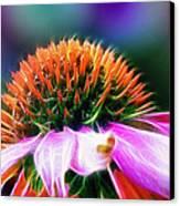 Purple Coneflower Delight Canvas Print by Bill Tiepelman