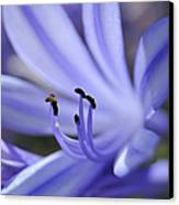 Purple Flower Close-up Canvas Print by Sami Sarkis