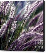 Purple Ornamental Fall Grass Canvas Print by Marjorie Imbeau