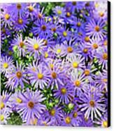 Purple Reigns Canvas Print by Joan Carroll