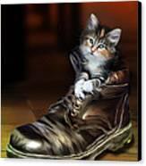 Puss In Boot Canvas Print by Julie L Hoddinott