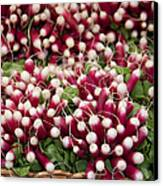 Radishes In A Basket Canvas Print by Jane Rix