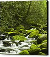 Rapids At Springtime Canvas Print by Andrew Soundarajan