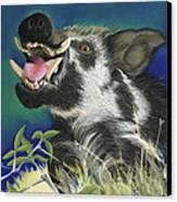 Razorback Canvas Print by Tracy L Teeter