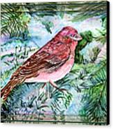 Red Finch Canvas Print by Mindy Newman
