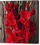 Red Gladiolus Canvas Print by Garry Gay