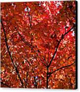 Red Leaves Black Branches Canvas Print by Rich Franco