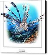 Red Lionfish Canvas Print by Owen Bell