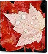 Red Maple Leaves Canvas Print by Mike Grandmailson