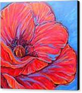 Red Poppy Canvas Print by Jenn Cunningham