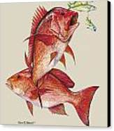 Red Snapper Canvas Print by Kevin Brant