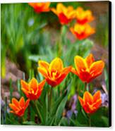 Red Tulips Canvas Print by Paul Ge