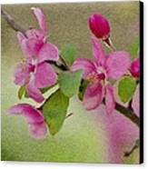 Redbud Branch Canvas Print by Jeff Kolker