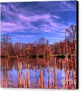 Reeds Canvas Print by Paul Ward