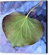 Reverse Ivy On Blue Canvas Print by Beth Akerman