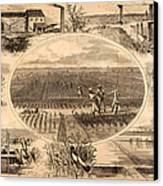 Rice Plantation, 1866 Canvas Print by Granger