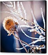 Road Side Plant Canvas Print by Lisa  Spencer