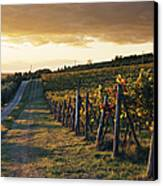 Road Through Vineyard Canvas Print by Jeremy Woodhouse