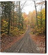 Roads Less Traveled Canvas Print by Catherine Reusch  Daley