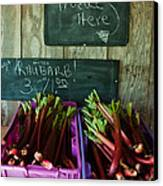 Roadside Produce Stand Rhubarb Canvas Print by Denise Lett