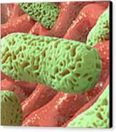 Rod-shaped Bacteria, Artwork Canvas Print by David Mack