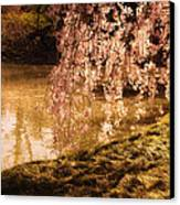 Romance - Sunlight Through Cherry Blossoms Canvas Print by Vivienne Gucwa