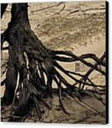 Roots Canvas Print by Odd Jeppesen
