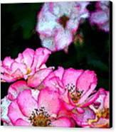 Rose 121 Canvas Print by Pamela Cooper